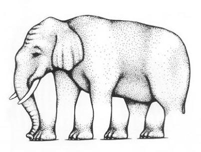 elephant_illusions